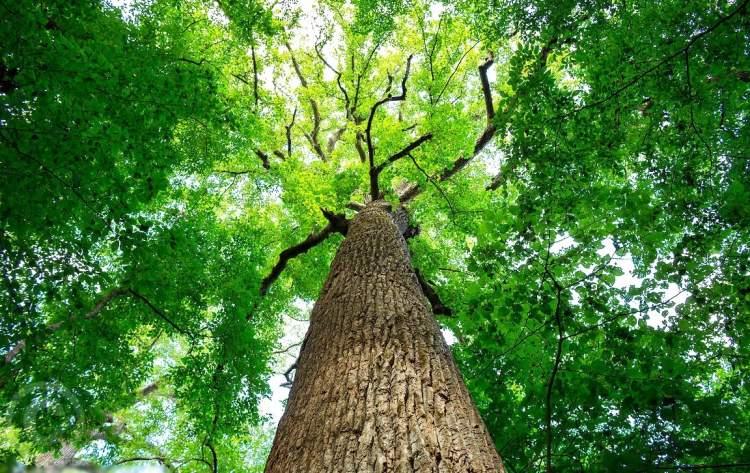 kabak ağacı görmek