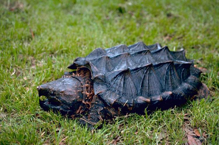 Rüyada Kaplumbağa Isırması