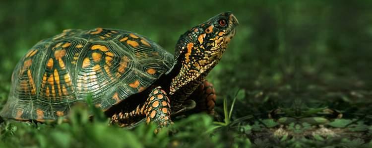 kaplumbağa öldürmek