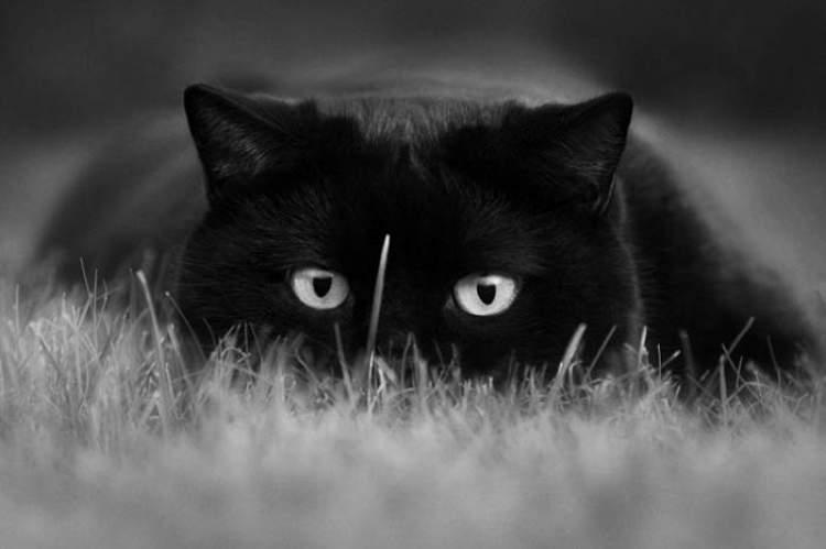 kara kedi öldürmek