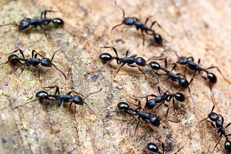 karınca öldürmek