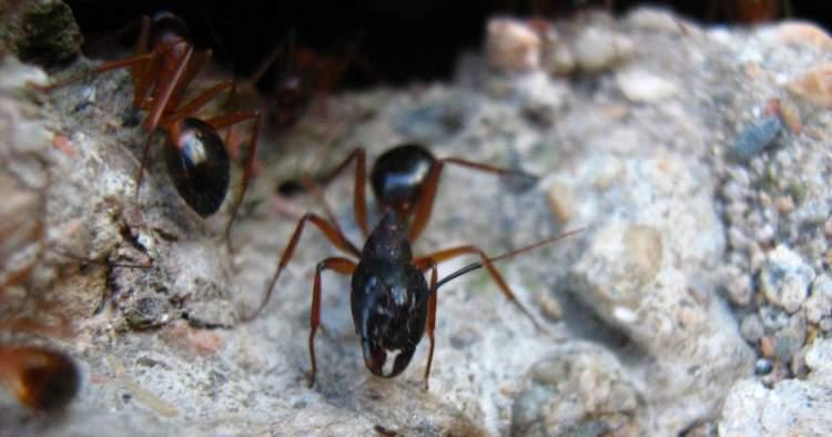 Rüyada Karınca Süpürmek