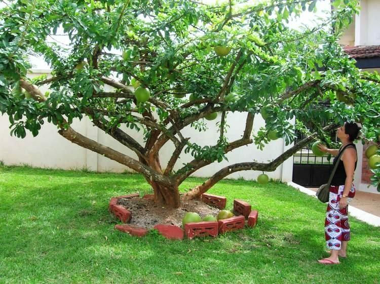 Rüyada Karpuz Ağacı Görmek