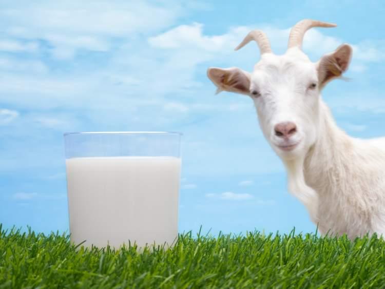 Rüyada Keçi Sütü Görmek