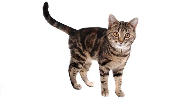 kedi dövmek