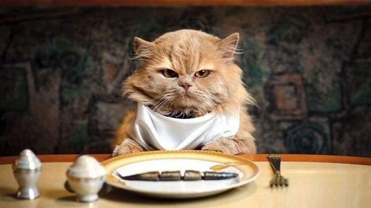 Rüyada Kedi Eti Yendiğini Görmek