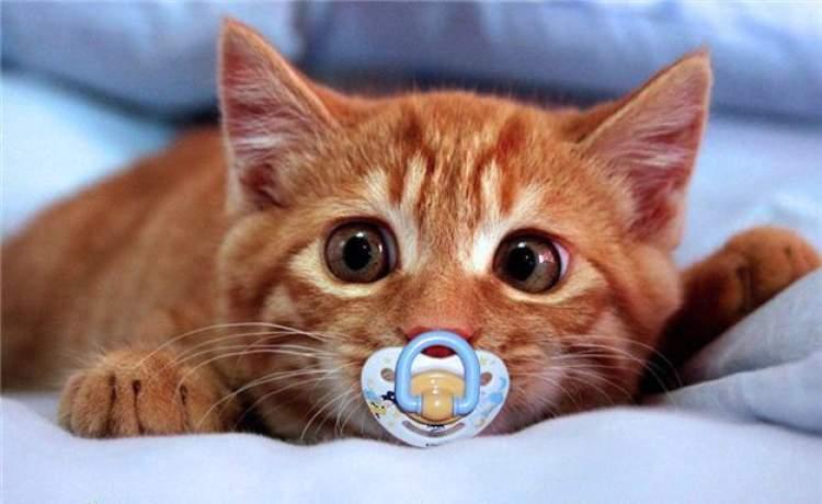 Rüyada Kedi Kesmek