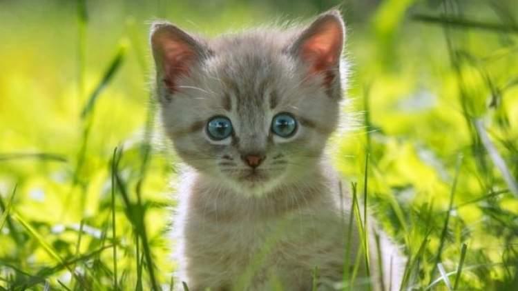 kedi kovaladığını görmek
