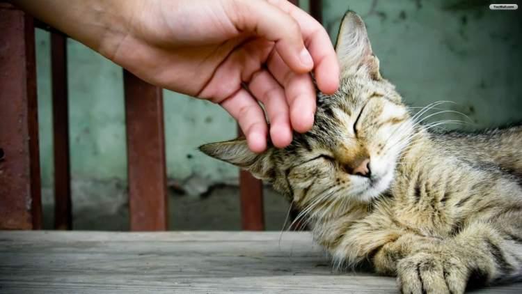 Rüyada Kedi Sevmek