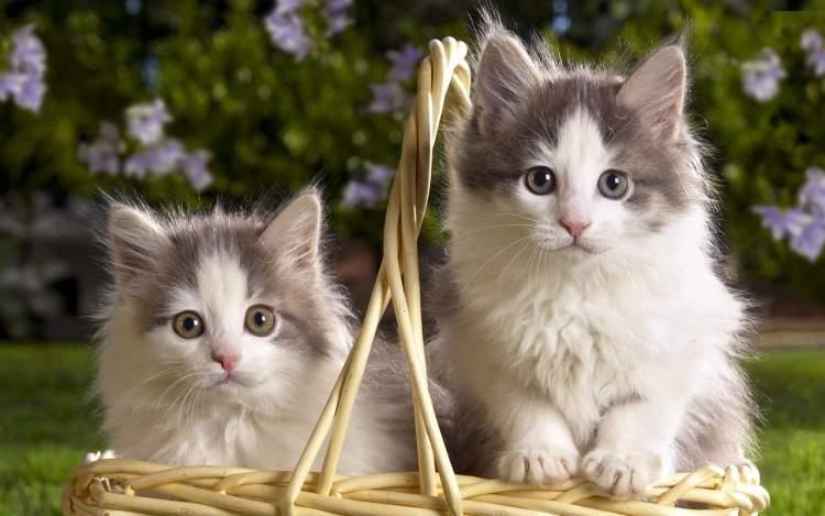 kedi ve kedi yavrusu görmek
