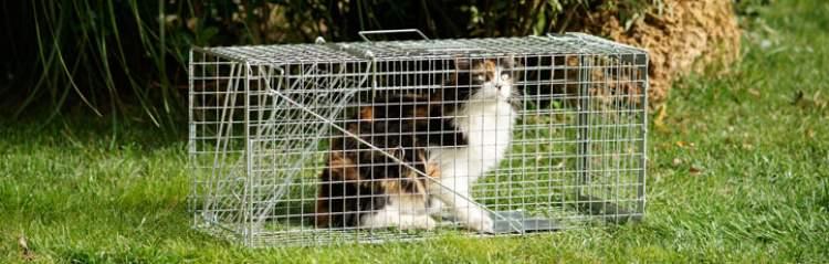 kedi yakalamak