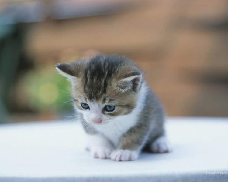 Rüyada Kedi Yavrusu Görmek
