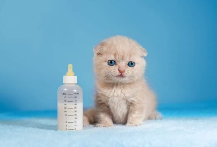 Rüyada Kedi Yavrusu Sevmek