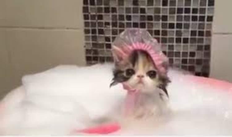 kedi yıkamak