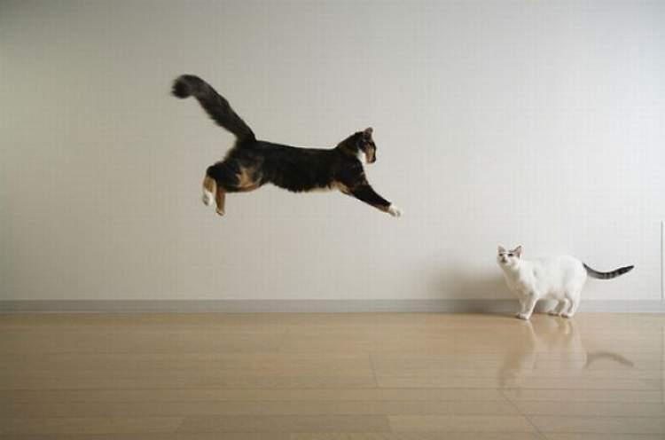 kedinin üzerine atlaması