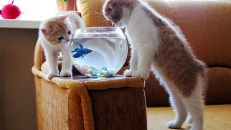 kediye balık vermek