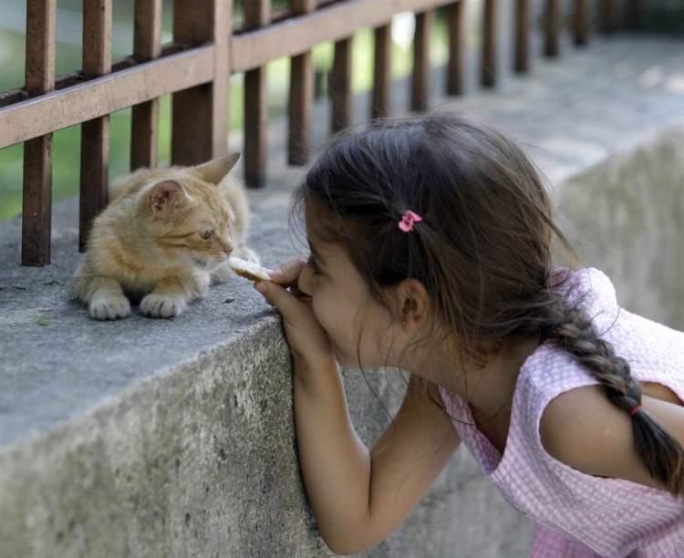 kediye ekmek vermek