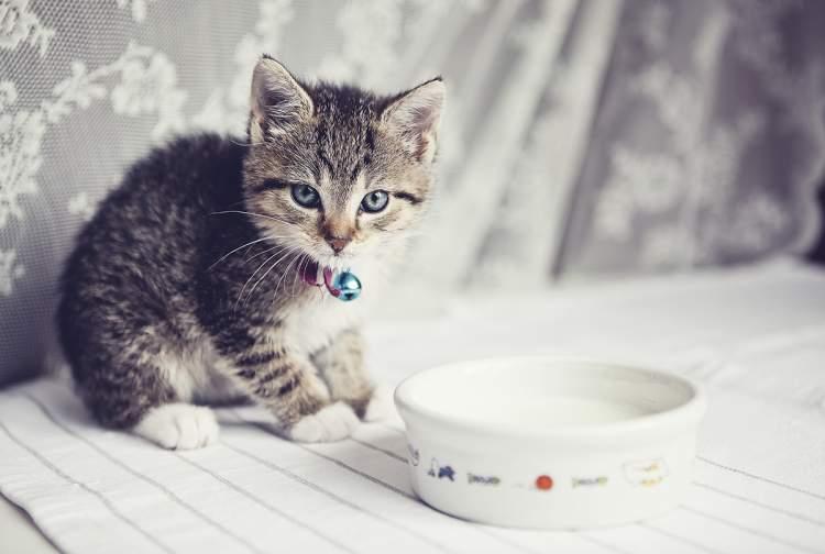 kediye süt vermek