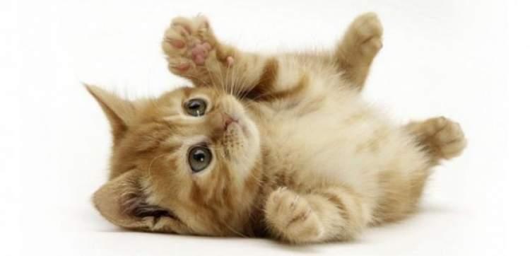 kediyi dövmek
