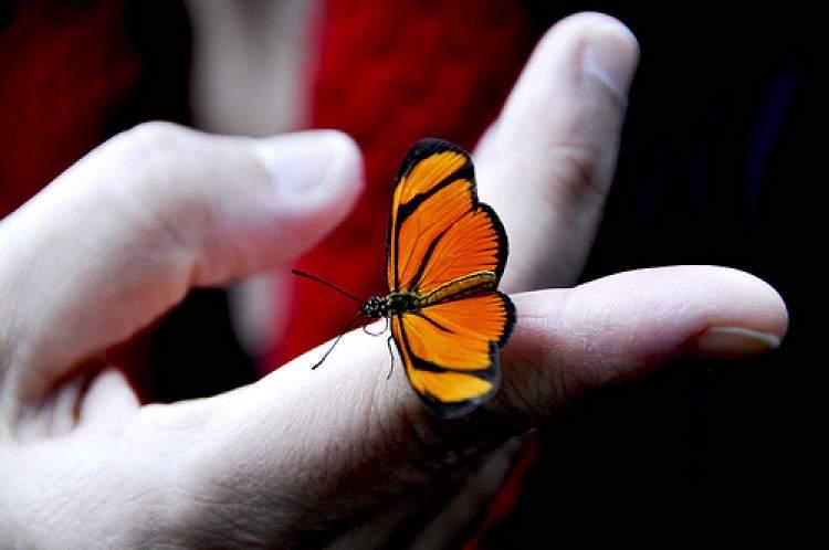 kelebek yakalamak