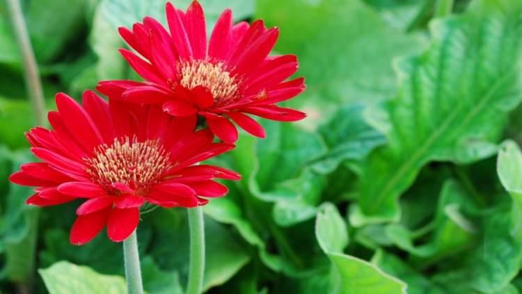 kırmızı çiçek görmek