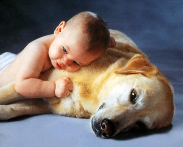 Rüyada Köpeği Sevmek