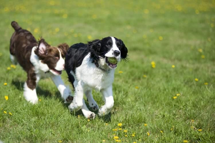 köpeğin kovaladığını görmek