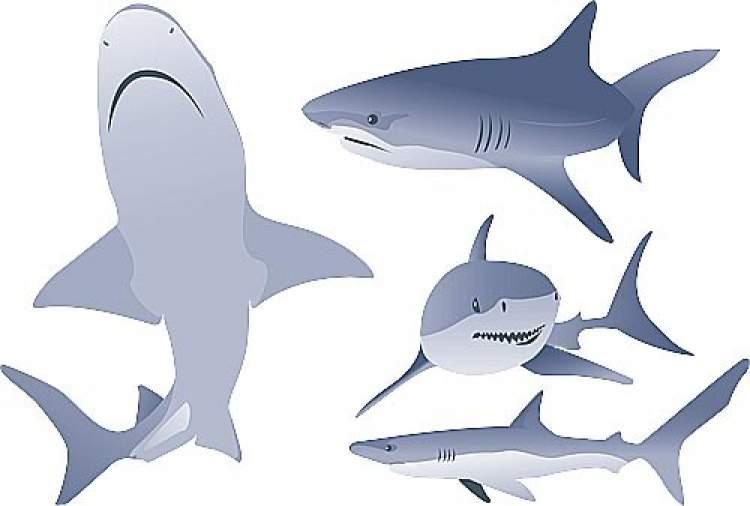 köpek balığı görmek