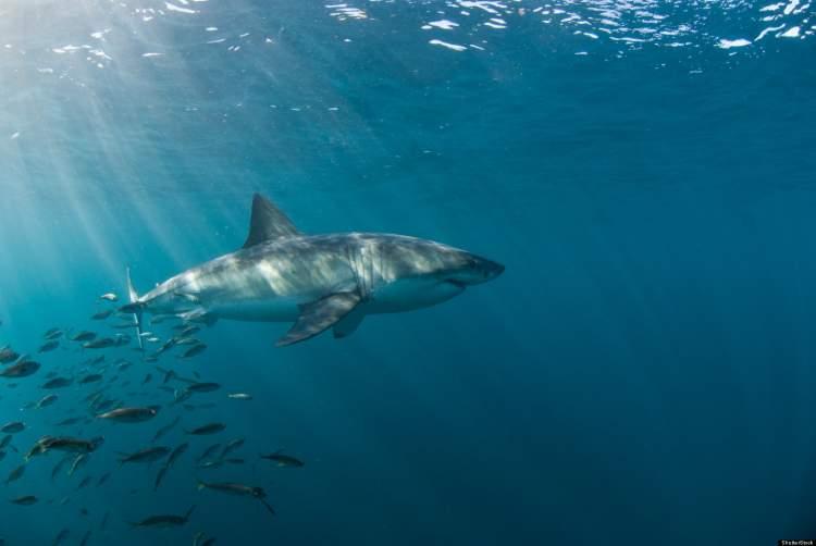 Rüyada Köpek Balığından Kaçmak