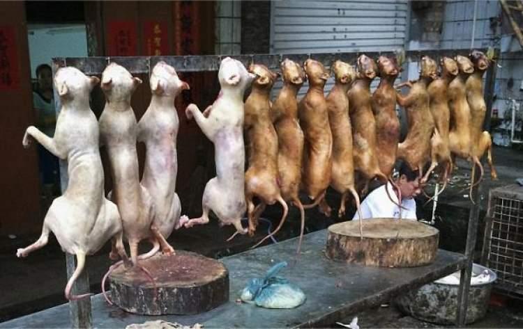 Rüyada Köpek Eti Yemek