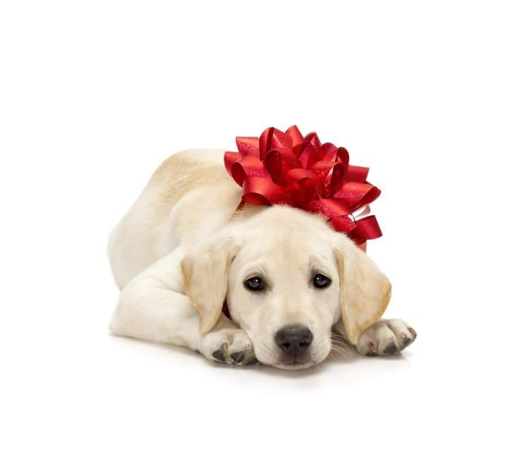 köpek hediye almak