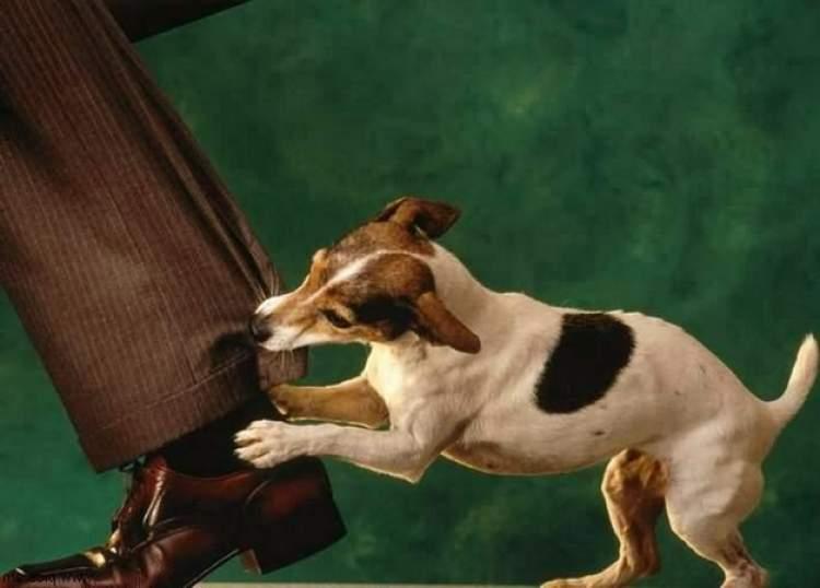 Rüyada Köpek İsirmasi Görmek