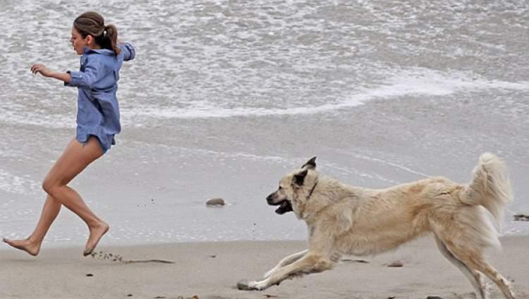 köpek kovaladığını görmek