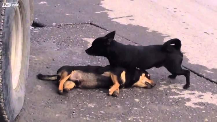 köpek ölmesi