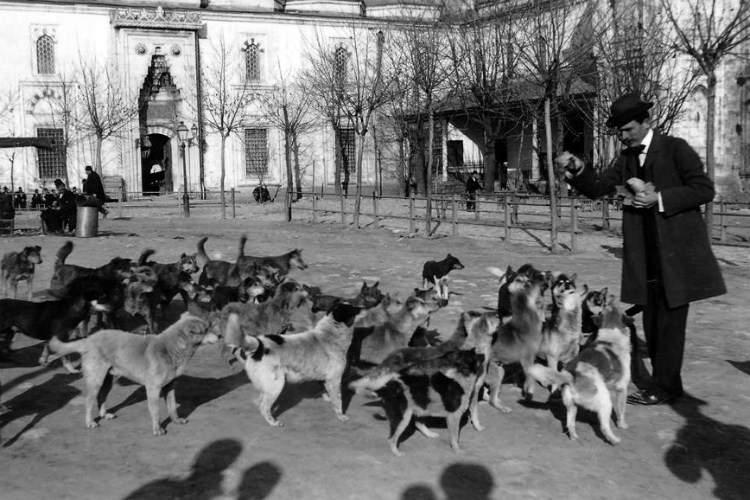 Rüyada Köpek Sürüsü Görmek