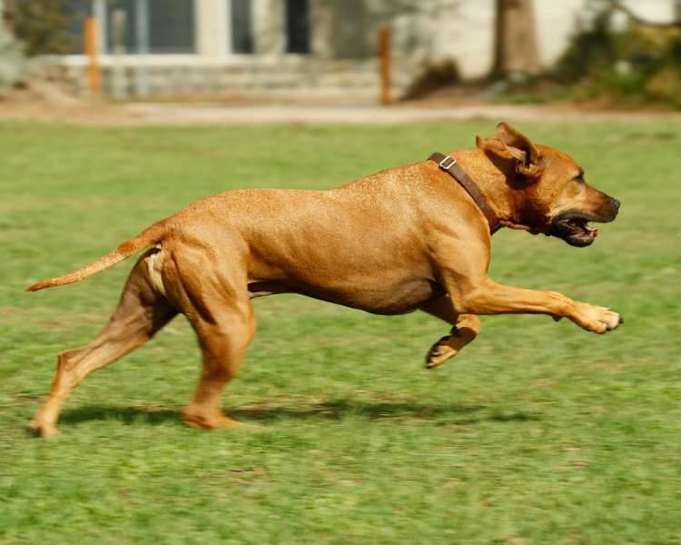 köpekten kaçmak