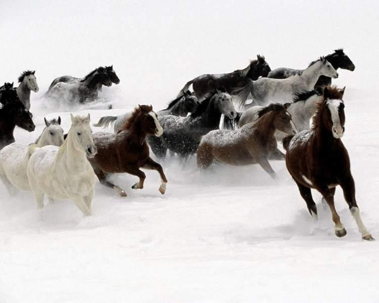 koşan atlar görmek