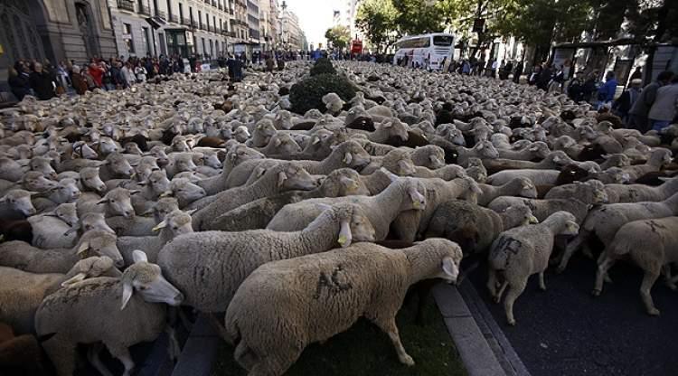 Rüyada Koyun Keçi Sürüsü Görmek