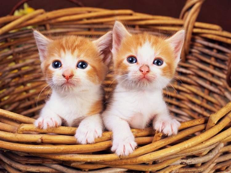 küçük kediler görmek