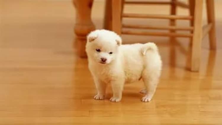 Rüyada Küçük Köpek Görmek