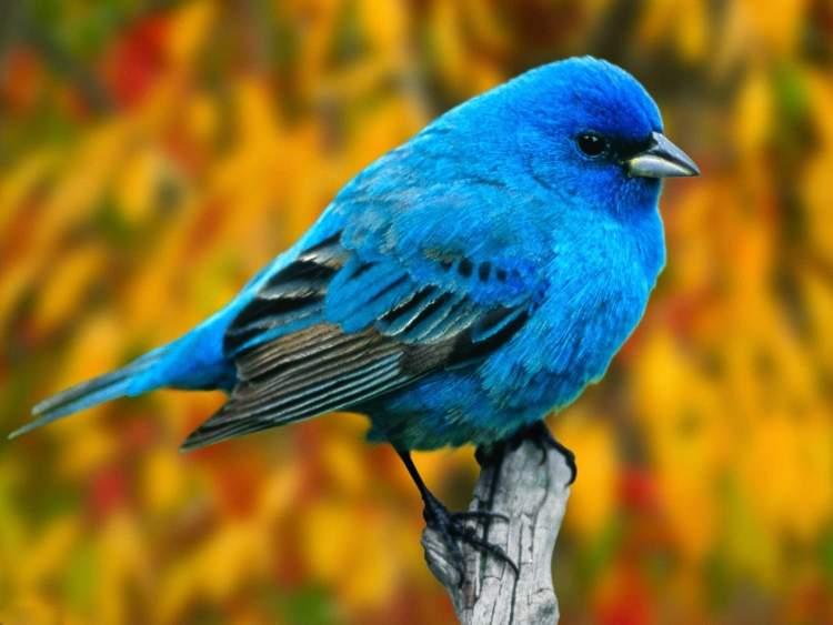 küçük kuşlar görmek