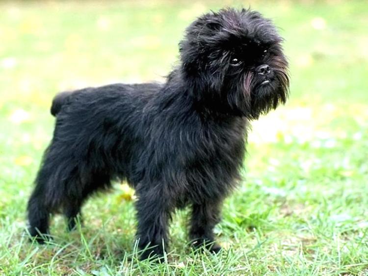 küçük siyah köpek görmek