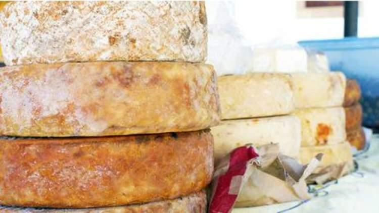kurtlu peynir görmek
