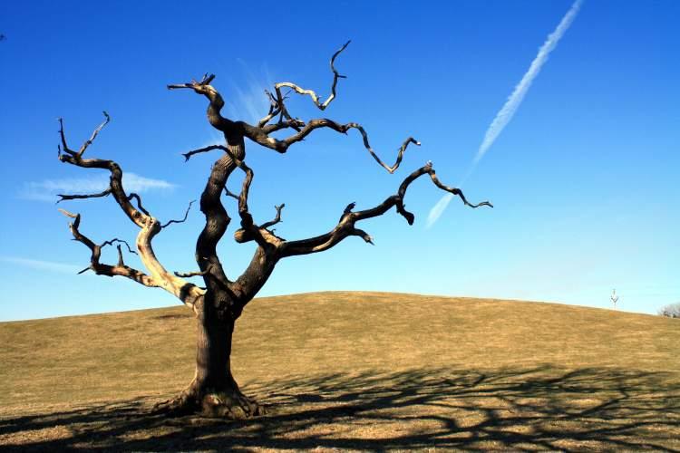 Rüyada Kuru Ağaç Görmek