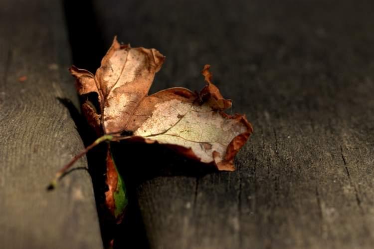 kuru yaprak görmek