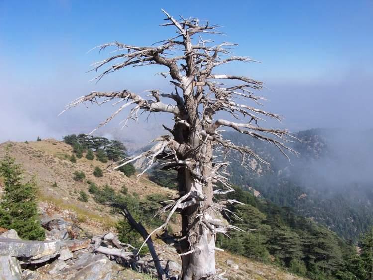 kurumuş ağaç görmek