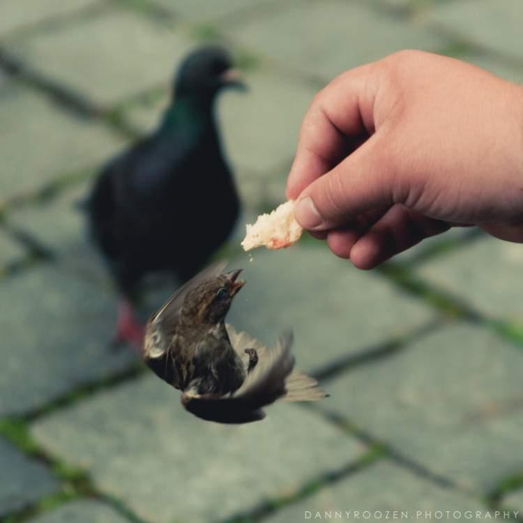 kuşa ekmek vermek