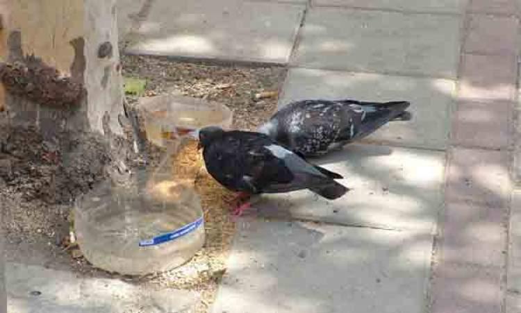 kuşa su vermek