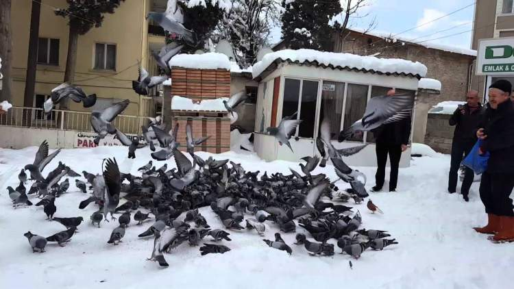 kuşlara ekmek vermek