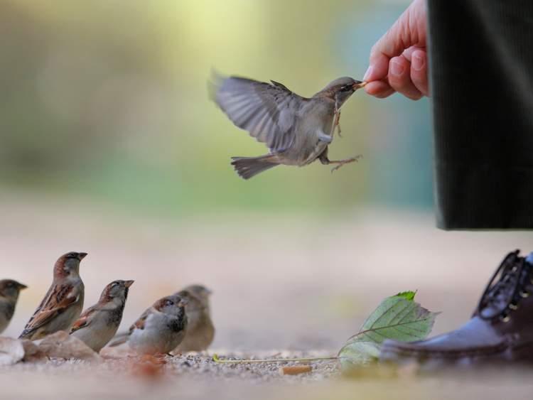 kuşlara yem vermek